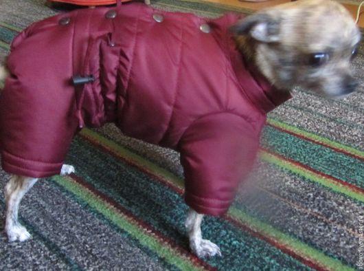Одежда для собак, ручной работы. Ярмарка Мастеров - ручная работа. Купить Чихуахуа. Handmade. Бордовый, зимняя одежда, Плащёвка
