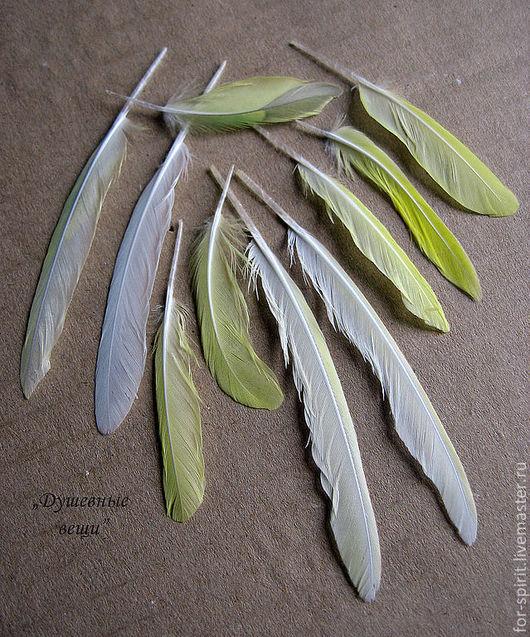 Другие виды рукоделия ручной работы. Ярмарка Мастеров - ручная работа. Купить (10 шт) Перья попугая (три вида). Handmade.