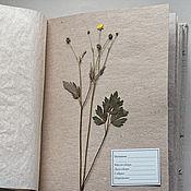 Альбом для гербария Опушка леса и луг (А4, для 40 растений, крафт)