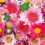 Kirusia (Цветочное чаепитие) - Ярмарка Мастеров - ручная работа, handmade