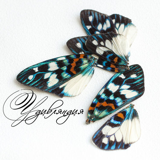 Другие виды рукоделия ручной работы. Ярмарка Мастеров - ручная работа. Купить Крыло бабочки натуральное №5.. Handmade. Белый