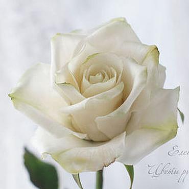 Цветы и флористика ручной работы. Ярмарка Мастеров - ручная работа Белая роза из полимерной глины. Handmade.