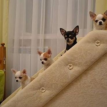 Для домашних животных, ручной работы. Ярмарка Мастеров - ручная работа Лесенка для собак высокая. Handmade.