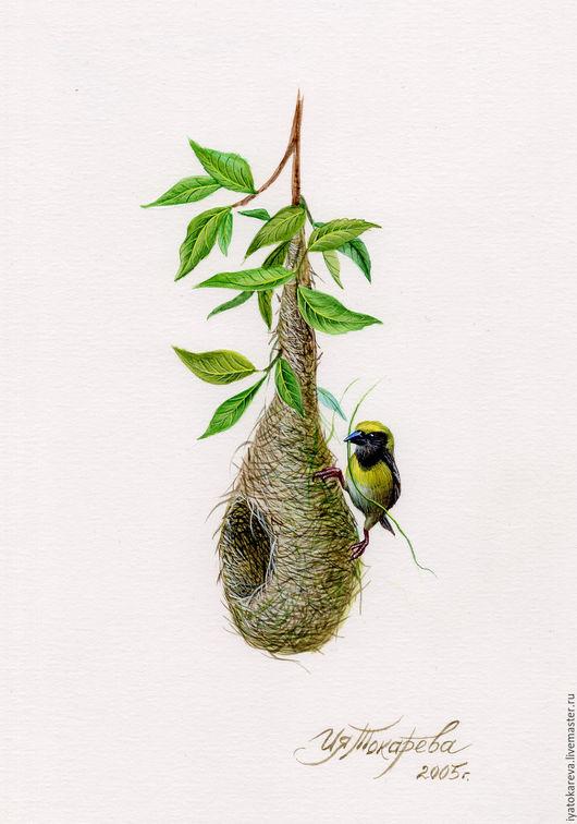 Ткачик вьёт гнездо. Акварельная миниатюра. Иллюстрация к книге.