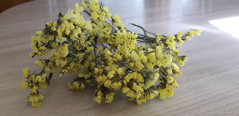 Статица. Сухоцвет, Цветы, Пятигорск,  Фото №1