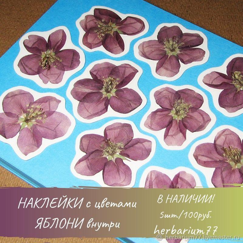 НАКЛЕЙКИ стикеры с  сухоцветами купить онлайн в магазине ГЕРБАРИЙ, Наклейки, Москва,  Фото №1