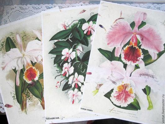 """Репродукции ручной работы. Ярмарка Мастеров - ручная работа. Купить """"Panteek- орхидеи"""" - принт на бумаге  ручной работы. Handmade. Белый"""