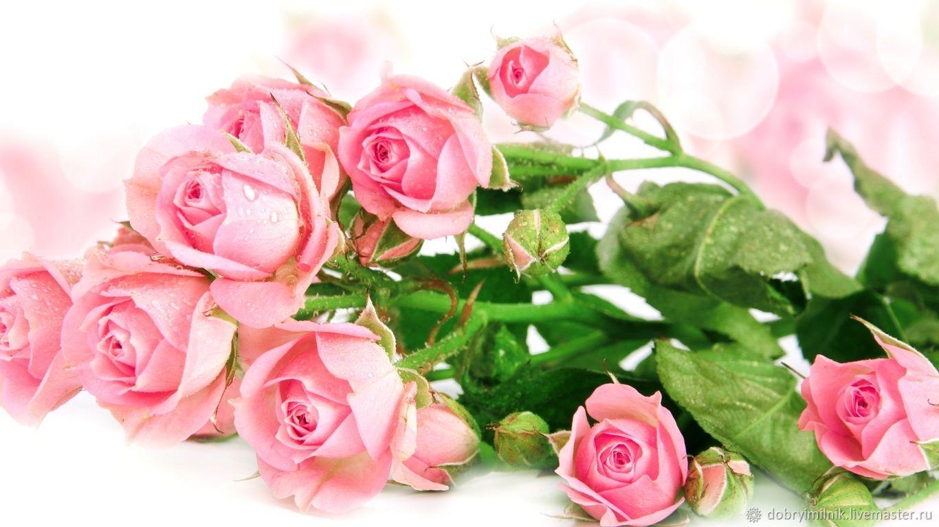 Отдушка Свежесрезанные розы для мыла, свечей, бомбочек (США), Материалы, Москва, Фото №1