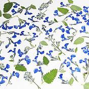Сухоцветы ручной работы. Ярмарка Мастеров - ручная работа Гербарий, засушенные цветы и листья, сухоцветы купить онлайн магазин. Handmade.