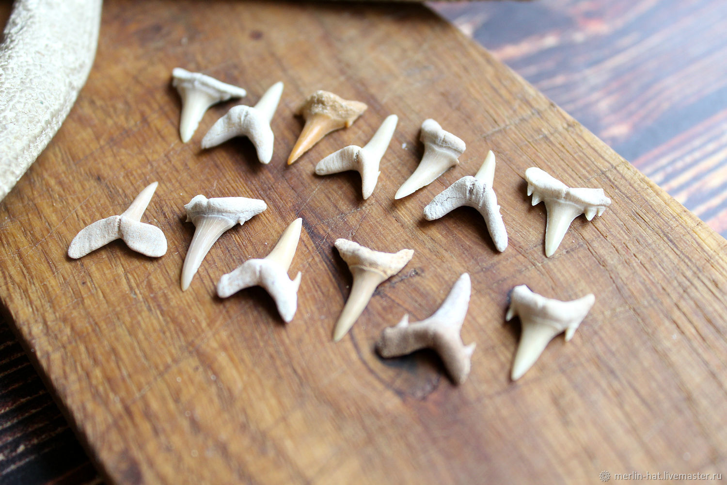 Fossilized shark tooth 10-23 mm, Figurines in Russian style, Tambov,  Фото №1