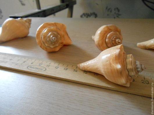 Аппликации, вставки, отделка ручной работы. Ярмарка Мастеров - ручная работа. Купить Ракушки морские (05-179). Handmade. Бежевый