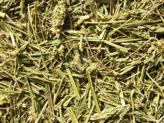 Черноголовник многобрачный (купить сухие травы). Цена за 1 г. Доставка почтой по всей России