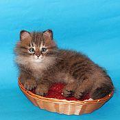 Куклы и игрушки handmade. Livemaster - original item Siberian kitten. Handmade.