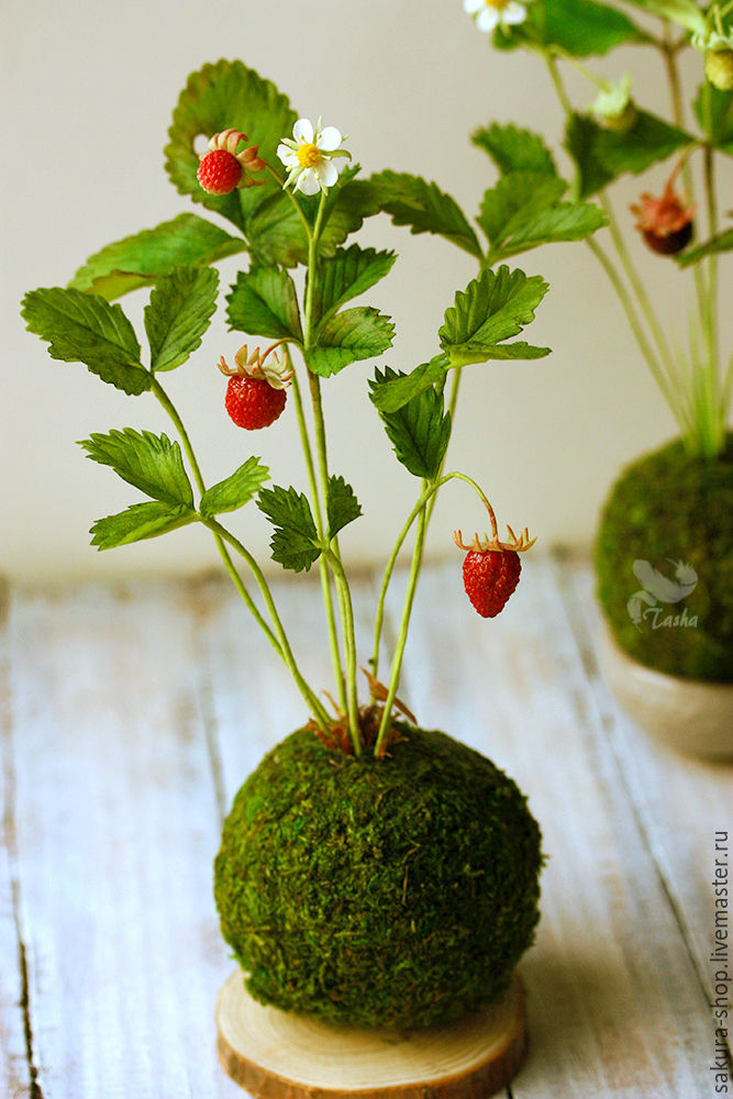 bonsai kokedama interior with strawberries scent of. Black Bedroom Furniture Sets. Home Design Ideas