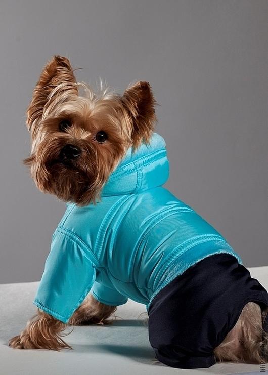 Одежда для собак, ручной работы. Ярмарка Мастеров - ручная работа. Купить Одежда для собак комбинезон Дутик Бирюзовый. Handmade.