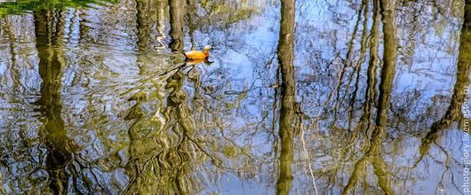 """Фотокартины ручной работы. Ярмарка Мастеров - ручная работа. Купить Фотокартина талисман  """"Отражение весны"""". Handmade. Разноцветный, природа, утка"""