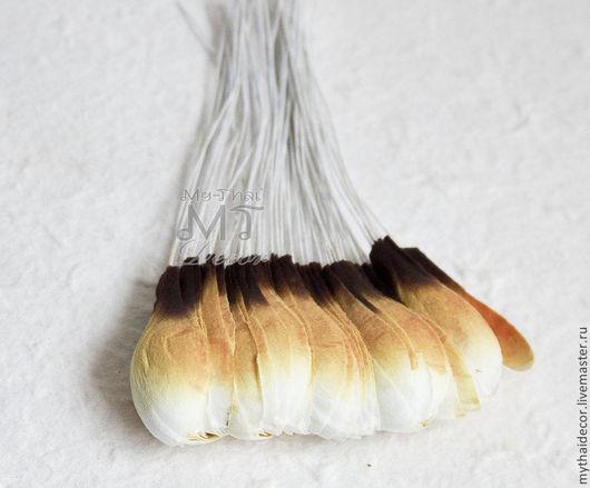 Лепестки бело-коричневые закругленные. Тайские цветы и материалы от поставщика My Thai
