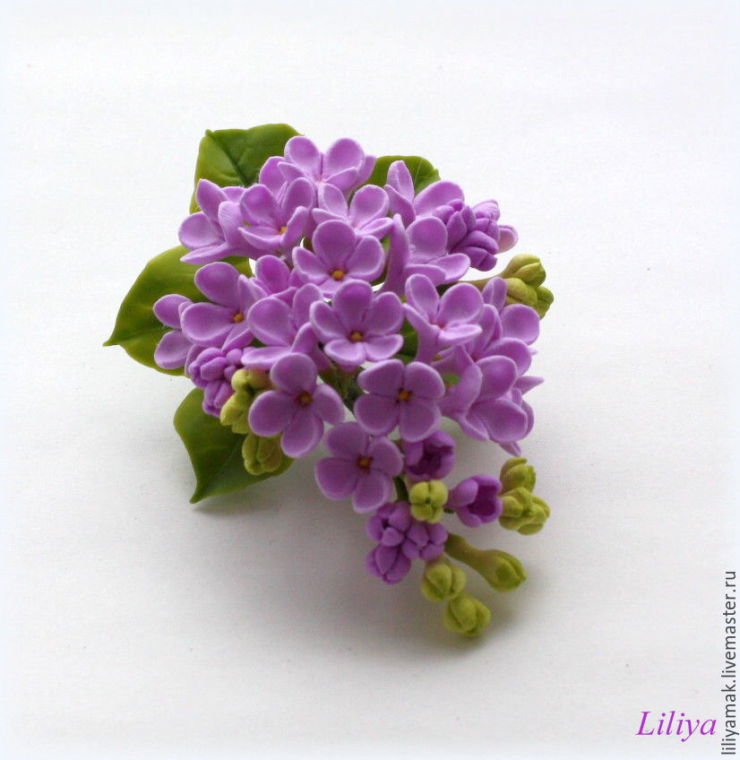 Купить необычные цветы сирень купить цветы в великом новгороде на клумбы