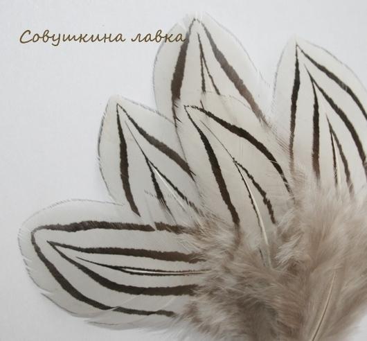 Другие виды рукоделия ручной работы. Ярмарка Мастеров - ручная работа. Купить Перья серебряного фазана. Handmade. Перья