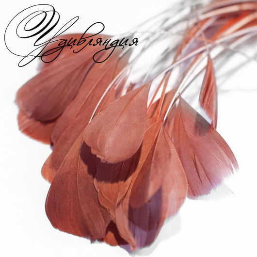 Другие виды рукоделия ручной работы. Ярмарка Мастеров - ручная работа. Купить Перо петуха на ножке натуральное, окрашенное №169.. Handmade.