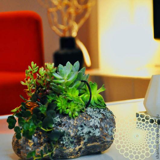 Уникальные живые букеты из коллекционных комнатных растений и интерьерные композиции