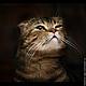 Серьги ручной работы. Заказать Серьги Хитрый кот, lampwork, латунь, позолота. Ольга  Бабкина  -  BonBijou. Ярмарка Мастеров.