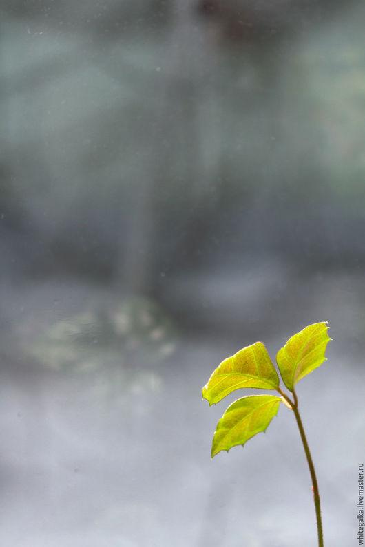 Фотокартины ручной работы. Ярмарка Мастеров - ручная работа. Купить в ожидании весны. Handmade. Серый, авторская работа, фотокартина в подарок