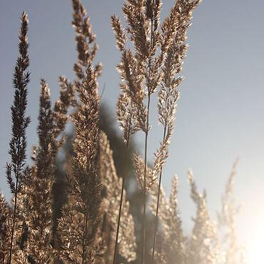 """Дизайн и реклама ручной работы. Ярмарка Мастеров - ручная работа Коллекция фотокартин """"Солнце в травах затерялось"""". Handmade."""