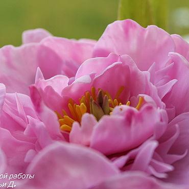 Цветы и флористика ручной работы. Ярмарка Мастеров - ручная работа Розовые облака. Handmade.