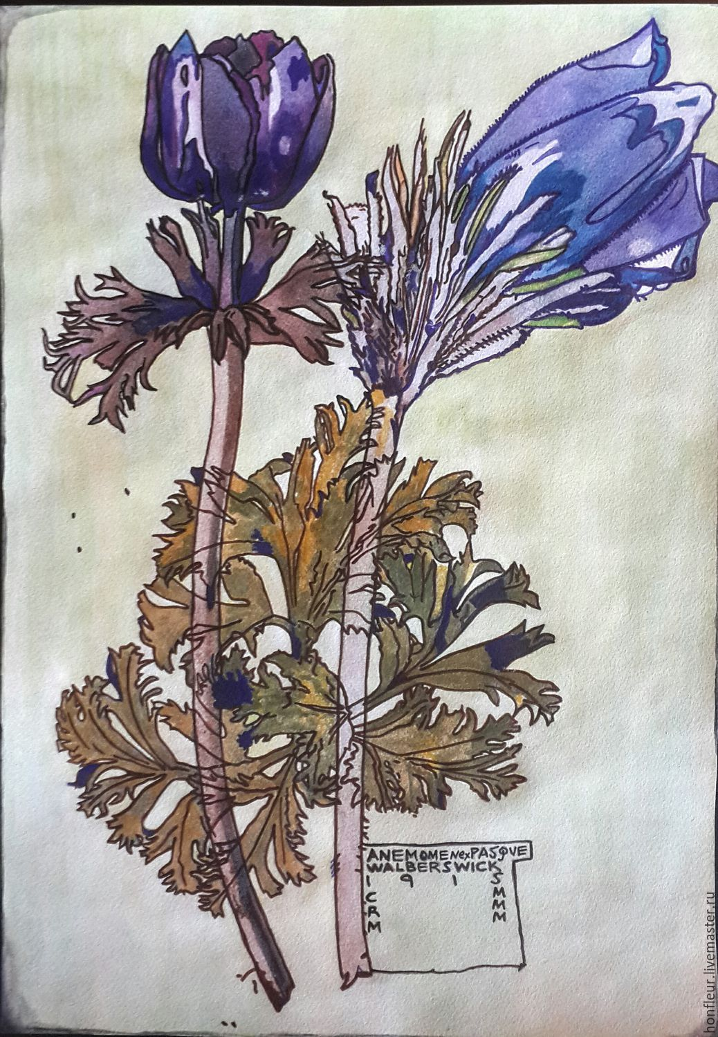Watercolor herbarium. Charles Rennie Mackintosh, a copy of, Pictures, Moscow,  Фото №1