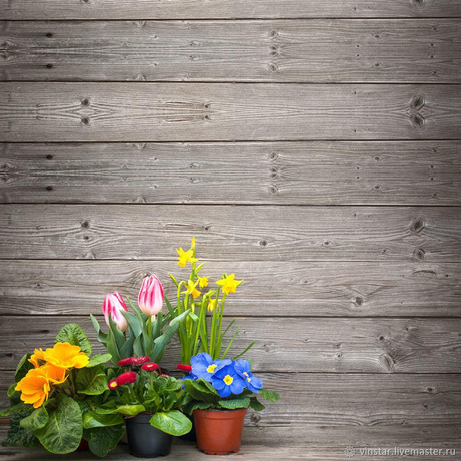 Фотофон виниловый Горшечные цветы, Фото, Курск,  Фото №1