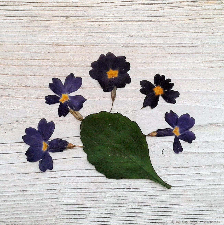 """Лот ЭС-10. """"Примула"""" Цветы для эпоксидной смолы, сухоцвет, Травы, Москва,  Фото №1"""