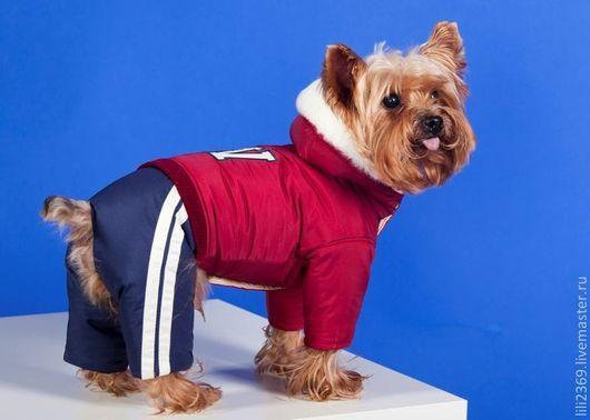 """Одежда для собак, ручной работы. Ярмарка Мастеров - ручная работа. Купить Комбинезон """"Мистер W"""". Handmade. Одежда для собак на заказ"""