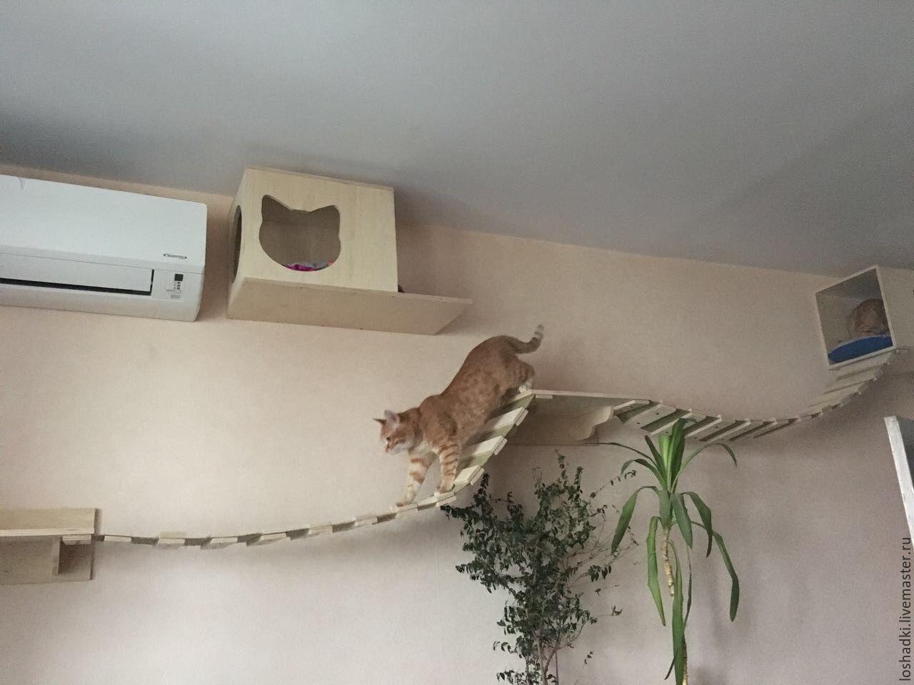 Bridge For Cats Ladder Transfer Shop Online On