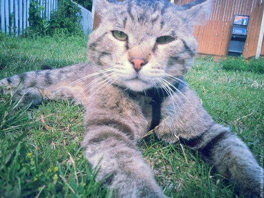 Шлейка для кошки/ кожа быка/ исключительно ручная работа/ 1500 рублей/ Приглашаем Вас в гости http://vk.com/myhandsel
