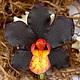 Заколки ручной работы. Ярмарка Мастеров - ручная работа. Купить Заколка с орхидеей из полимерной глины. Handmade. Черный, заколка с цветами
