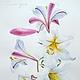 Картины цветов ручной работы. Ярмарка Мастеров - ручная работа. Купить Королевская лилия акварель. Handmade. Белый, герб