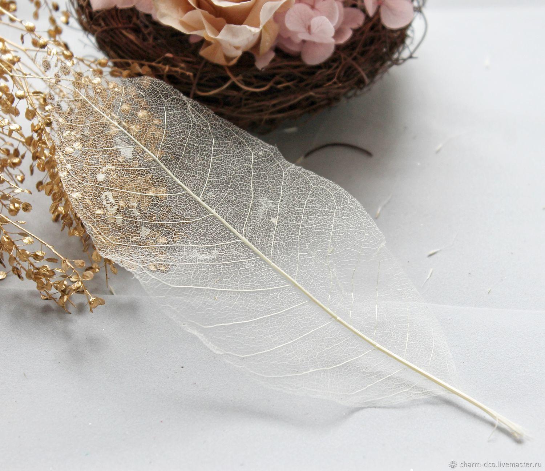 Листья скелетированные 1шт  (12-20см), Искусственные фрукты, Санкт-Петербург, Фото №1