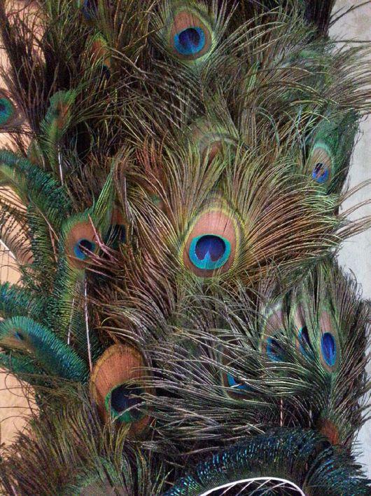 Другие виды рукоделия ручной работы. Ярмарка Мастеров - ручная работа. Купить Перья павлина. Handmade. Перья, перо павлина
