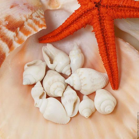 Для украшений ручной работы. Ярмарка Мастеров - ручная работа. Купить 10шт Ракушки миниатюрные 1-1,7см (светлые). Handmade.