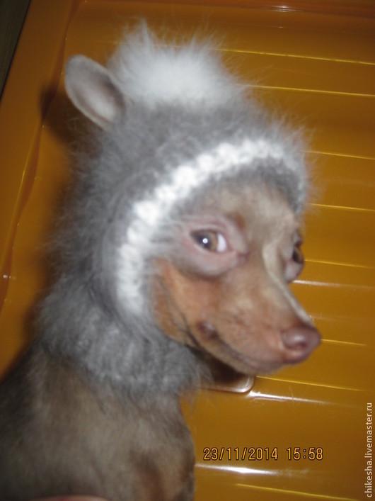 Аксессуары для собак, ручной работы. Ярмарка Мастеров - ручная работа. Купить шапочка для собачки. Handmade. Серый, пуховый, шапочка, собачкам