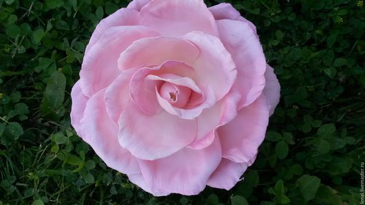 """Заколки ручной работы. Ярмарка Мастеров - ручная работа. Купить брошь-заколка из фоамирана  """"Розовая роза"""". Handmade. Бледно-розовый"""