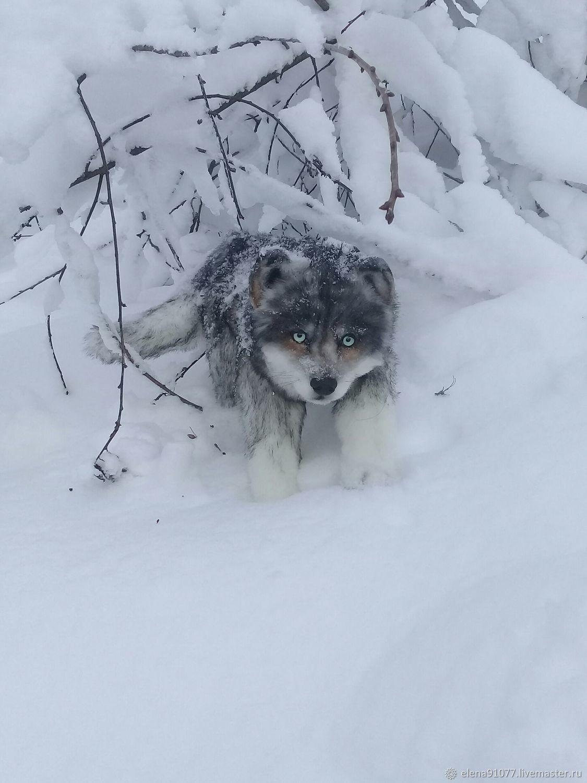 Puppy Teddy, Teddy Toys, Zheleznodorozhny,  Фото №1