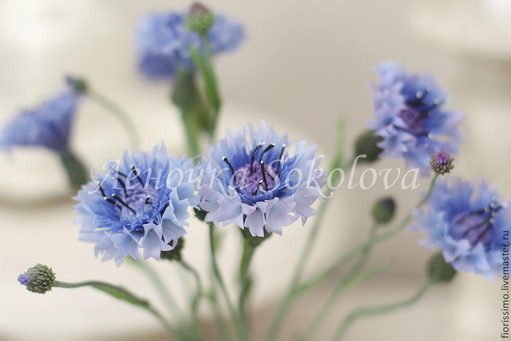 Купить васильки цветы