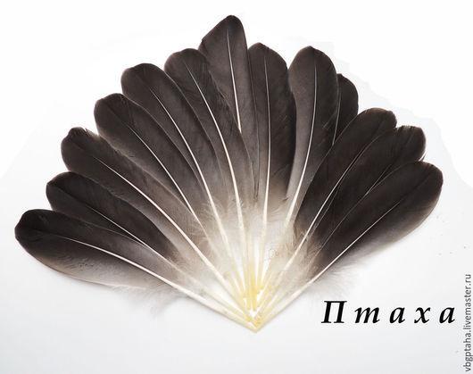 Другие виды рукоделия ручной работы. Ярмарка Мастеров - ручная работа. Купить Перья дикого гуся. Handmade. Темно-серый