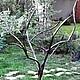 Экстерьер и дача ручной работы. Ярмарка Мастеров - ручная работа. Купить Дерево для Вашего сада. Handmade. Черный, дерево