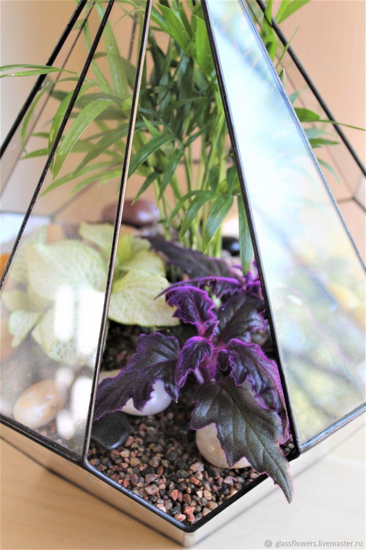 Флорариум в резной капле с фиттонией и гинурой, Растения, Санкт-Петербург,  Фото №1