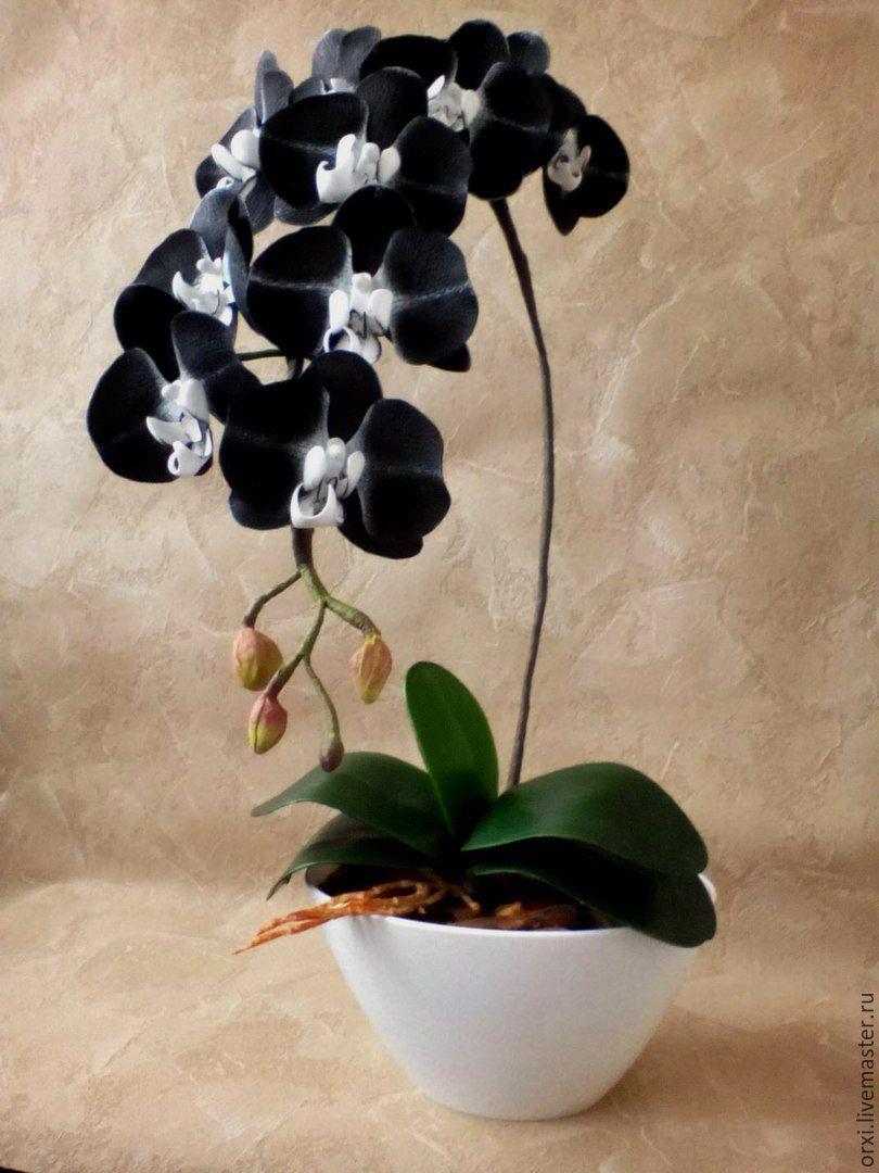 Чёрная орхидея купить цветок в горшке в москве