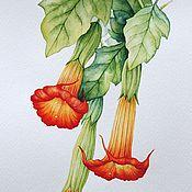 """Картины и панно ручной работы. Ярмарка Мастеров - ручная работа Рисунок """"Бругмансия"""" акварель. Handmade."""