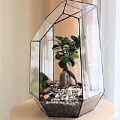 Цветы и флористика handmade. Livemaster - original item The Floriana. Florarium with ficus. bonsai. Handmade.